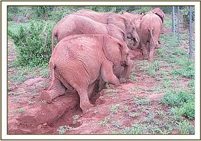 Orphans playing in an erosion gully