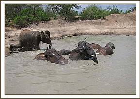 Ex orphans diving into the mudbath