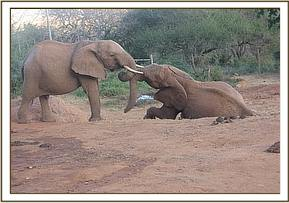 Mpala left playing with Morani