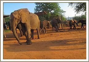 Mulika and some of the other ex orphans