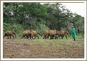 The nursery orphans playing in the forest