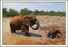 Mulika's baby coming out of the water