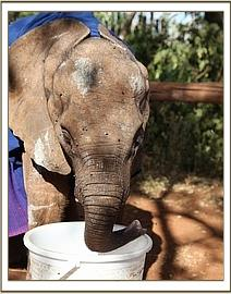 Moju plays with a bucket of water