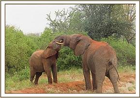 Orwa, behind, playing with Taita