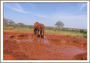 Laikipia arriving at the waterhole