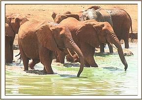 Emily's herd at the watering hole