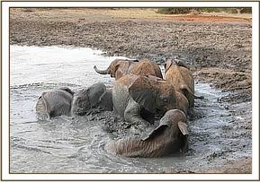 Orphans having fun wallowing