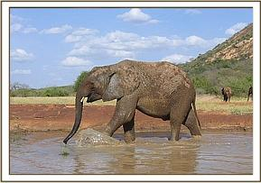 Napasha kicking the water with his foreleg