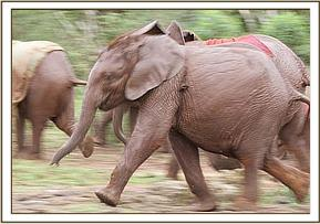 Lempaute and the other orphans running