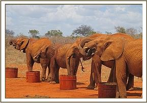 The orphans having a drink of water