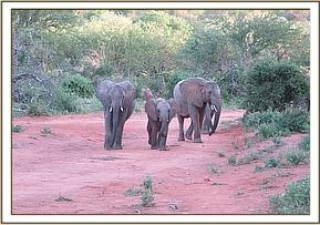 Lualeni and Wendi escorting Ololoo