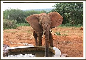 Morani having a drink