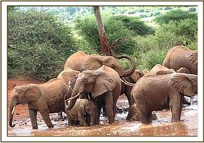A wild group enjoying a mudbath at the waterhole
