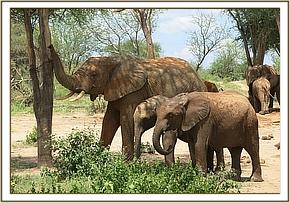 Taita with Laragai and Narok