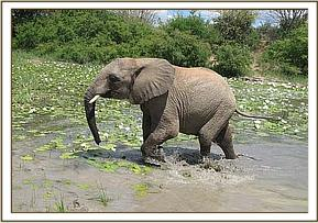 Taita in the mudwallow
