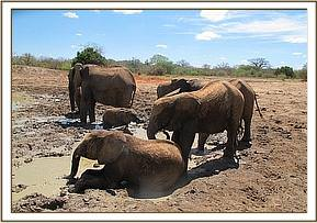 Mulika mudbathing with the orphans
