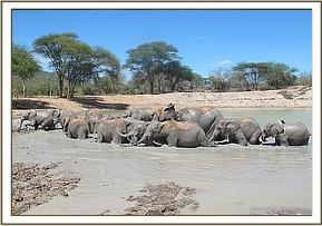 Ex orphans and orphans wallowing
