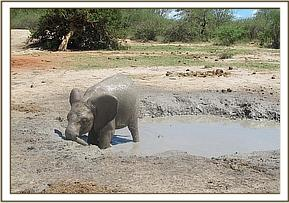 Ololoo in the mudbath