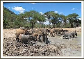 Galana's group joins the orphans at the mudbath