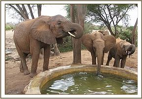 Wendi, Suguta and Sabachi have a drink