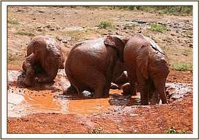 Sinya enjoying her mudbath