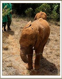Enkesha playing with a stick