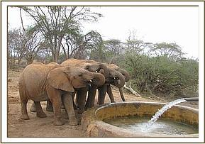 Orphans having a drink