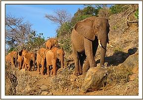Laikipia leading the youngsters to the field