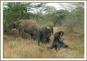 umani springs juli 2014 rettet die elefanten afrikas e v. Black Bedroom Furniture Sets. Home Design Ideas