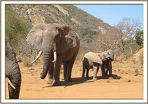 Wild elephant, Ithumbah and meibai