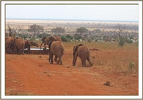 Nguvu and Tahri going to join the wild elephants