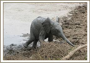 Chaimu playing in the mud