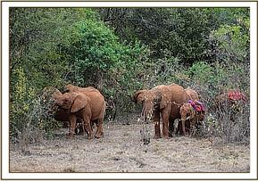 Orphans browsing in the forest