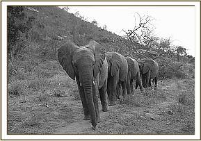 Our orphans iwalking in single file